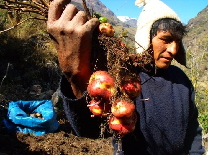 18-julio-evaristo-muestra-la-cosecha-de-papas-nativas